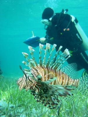 Lionfish observations